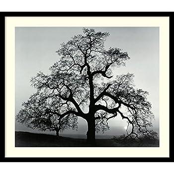 Framed Wall Art Print Oak Tree, Sunset City, California, 1962 by Ansel Adams 26.75 x 22.75