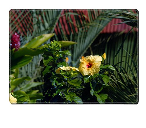 [MSD Placemat Image ID 24409352 Big Island of Hawaii is prolific in tropicals This all natural garden setting has palm fronds hibiscus and] (Palm Frond Placemat)