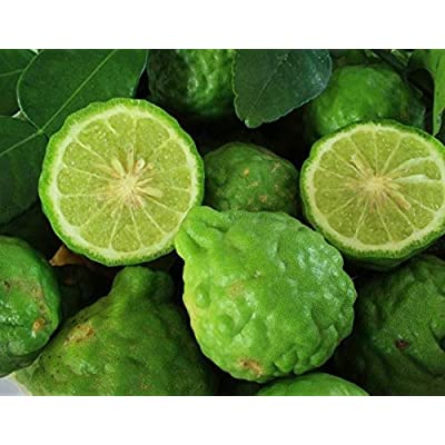 Portal Cool Thai Kaffir Lime 20 Seeds, Fragrant & Organic Source of Lime Leaves M93 : Garden & Outdoor