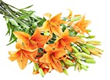 Orange Lily Bouquet (13 Stems) - Without Vase