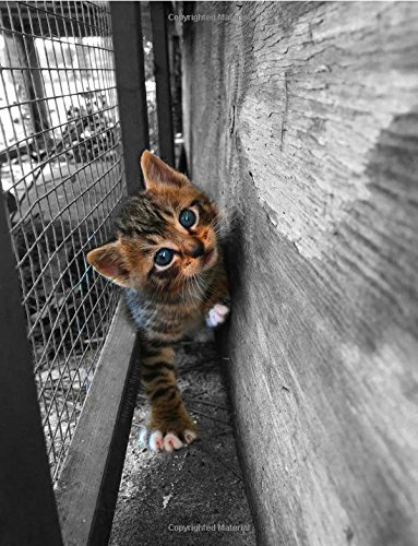 Adorable Striped Tabby Kitten Notebook: College ruled notebook with a beautiful striped tabby baby kitty is perfect for any cat lover. pdf