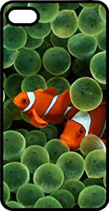 Clown Fish Hiding In An Anemone Tinted Rubber Case for Apple iPhone 4 or iPhone 4s wangjiang maoyi
