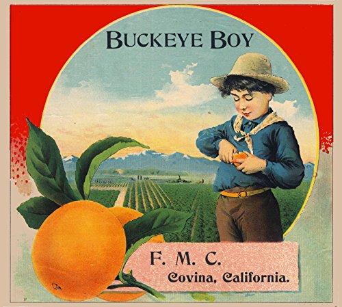 ckeye Boy Brand Orange Citrus Fruit Crate Box Label Art Print (Fruit Crate Label)