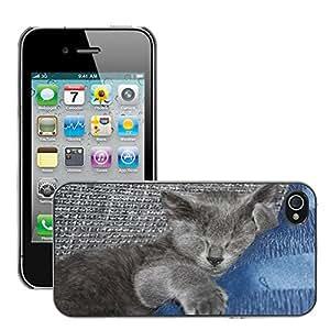 GoGoMobile Etui Housse Coque de Protection Cover Rigide pour // M00124480 Gatito del gato del sueño dulce joven // Apple iPhone 4 4S 4G