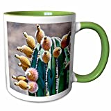 3dRose Danita Delimont - Cacti - Pachycereus pringlei, Cardon cactus, Baja, Mexico - SA13 MWI0044 - Mark Williford - 11oz Two-Tone Green Mug (mug_141611_7)