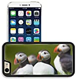 Liili Apple iPhone 6 iPhone 6S Aluminum Backplate Bumper Snap iphone6/6s Case Atlantic Puffin standing in grass Iceland Photo 20479452