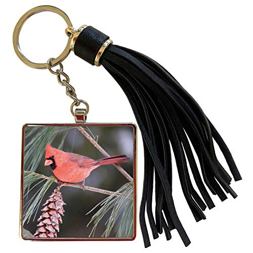 3dRose Danita Delimont - Birds - Northern Cardinal male in White Pine Tree, Marion, Illinois, USA. - Tassel Key Chain (tkc_207583_1)