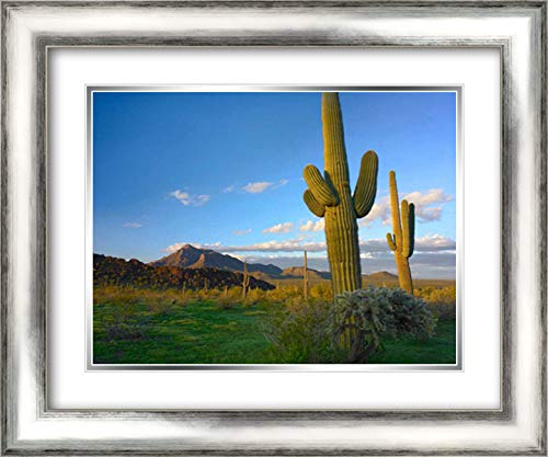 Saguaro and Teddybear Cholla, Picacho Peak State Park, Arizona 24x19 Silver Contemporary Wood Framed and Double Matted Art Print by Fitzharris, Tim