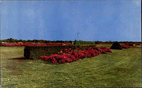 Rockingham Park Salem, New Hampshire Original Vintage - Rockingham Hampshire New Park Salem