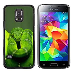 PC/Aluminum Funda Carcasa protectora para Samsung Galaxy S5 Mini, SM-G800, NOT S5 REGULAR! Cool Green Jungle Snake / JUSTGO PHONE PROTECTOR