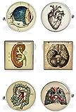 Kooer Vintage Bronze Human Anatomy Cufflinks Custom Anatomical Lungs Heart Cells Kidney Brain Bones Spine Eye