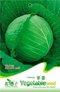 Free Shipping 3 Packs 150 Of CabPackse Seeds,Brassica Oleracea Wild cabPackse C033