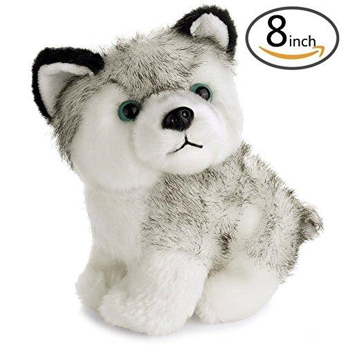 Husky Puppy - 3