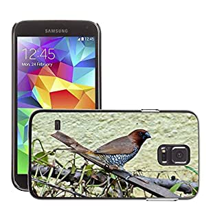 GoGoMobile Slim Protector Hard Shell Cover Case // M00119026 Spotted Munia Scaly-Breasted Munia // Samsung Galaxy S5 S V SV i9600 (Not Fits S5 ACTIVE)