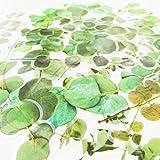 20PCS Original Leaves Scrapbook