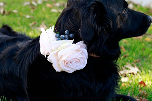 Silk Dog Corsage - Blush and Blue Berries