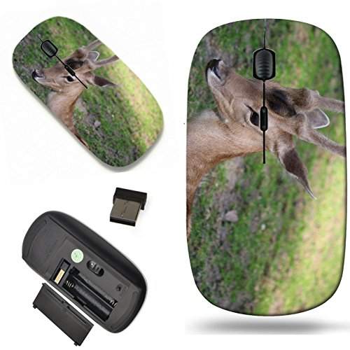(Luxlady Wireless Mouse Travel 2.4G Wireless Mice with USB Receiver, 1000 DPI for notebook, pc, laptop,mac design IMAGE ID: 34264298 Young male roe deer laying on the grass)