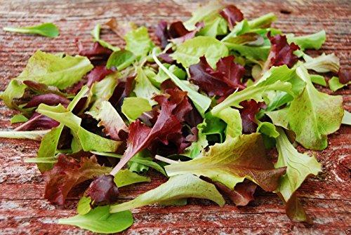 Organic Mesclun Mix Seeds, All Lettuce , Gourmet Salad Mix-2000 Seeds