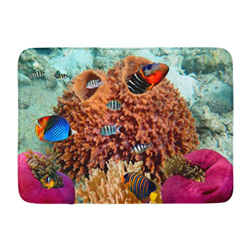 Darkchocl Decorative Bath Mat Coral Reef Life Marine Deep Ocean Animals Color Colorful Coral Fan Absorbent Non-Slip 100% Flannel 17''L x 24''W for Bathroom Toilet Bath tub Living Room (Life Bath Reef)