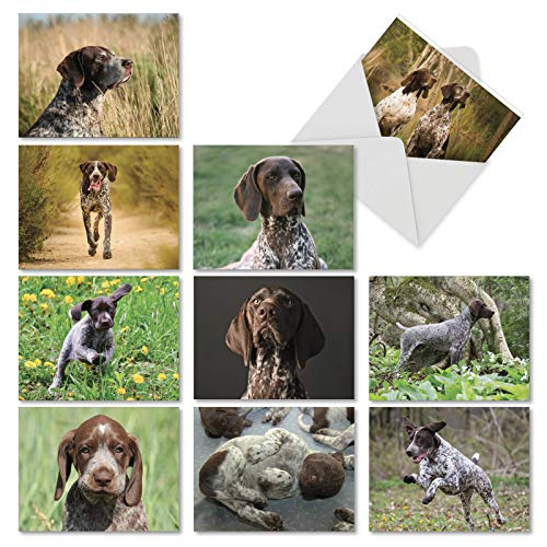Playful Pointers - 10 Assorted Blank Note Cards with Envelopes 4 x 5.12 inch - Adorable German Shorthaired Dog Breed All-Occasion Greeting Cards - Puppy and Animal Notecard Stationery AM6297OCB-B1x10