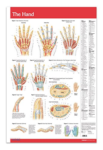 """Hand/Joints Articulations Chart 24"""" x 36"""" Laminated Medical Anatomy Poster - Quick Reference Chart by Permacharts"""