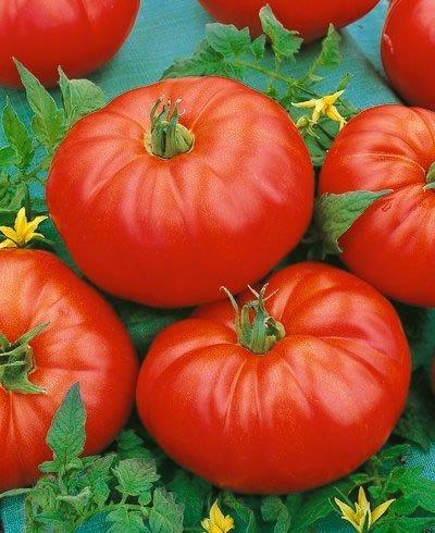 Beefmaster Hybrid Tomato Seeds - Lycopersicon Esculentum - 0.1 Grams - Approx 40 Gardening Seeds - Vegetable Garden -