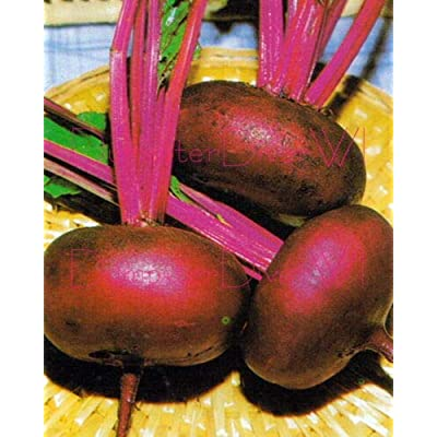 Product from Grandiosy Farm Crosby's Egyptian Flat Beet Heirloom Early & Tender 100+ Seeds Organic Non-GMO : Garden & Outdoor