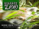 New Red Panda Arrival