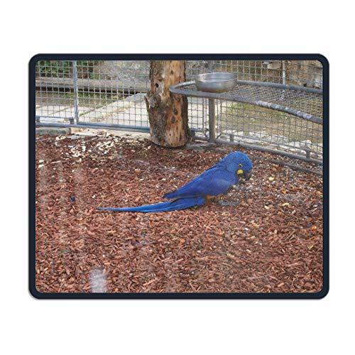 Animal Hyacinth Macaw Birds Mousepad Customized Rectangle Mouse -