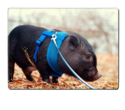 Luxlady Placemat Pot bellly pig on leash IMAGE 21423483 Customized Art Home Kitchen (Pot Belly Price Pig)