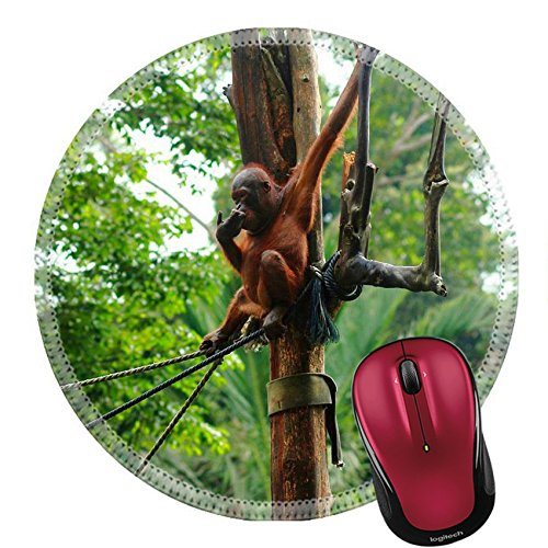 Liili Round Mouse Pad Natural Rubber Mousepad young orangutan siting on rope in rehabilitation Photo - Sites Malaysia In