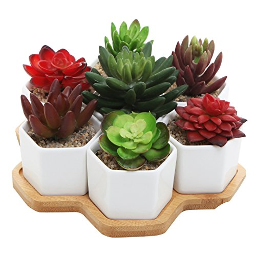 - Set of 7 Hexagon Shaped Ceramic Succulent Planters, Geometric Plant Pots with Bamboo Tray