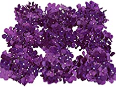 62 purple flower types with pictures flowerglossary luyue mightylinksfo