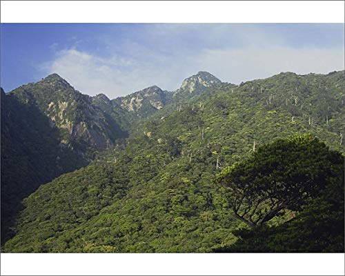 Media Storehouse 10x8 Print of Virgin Forest and Mountains on Yakushima (18990843)