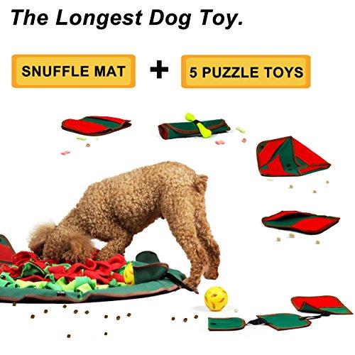 The 8 best indoor games for smart dogs