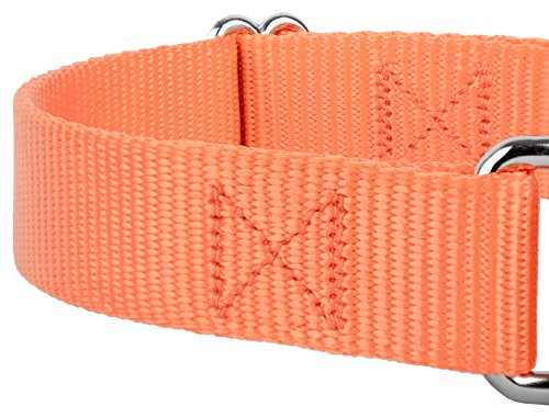 Pictures of Country Brook Design | Martingale Heavyduty Nylon Dog 3