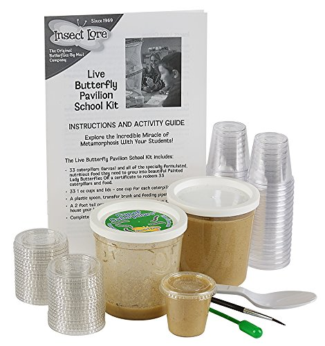 Insect Lore School Kit Refill with 33 Live Caterpillars Habitat