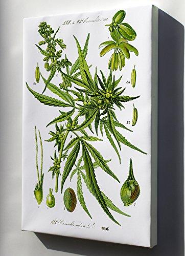 Canvas 24x36; Cannabis C1885 Marijuana Pot Smoking Hemp Weed - Cannabis Wall decor