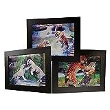 3D Lenticular Framed Animal Picture (Tiger)