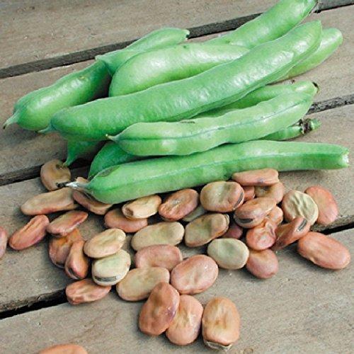 jelly bean hybrid - 9