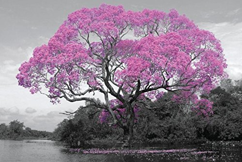 Buyartforless Pink Blossom Tree 36x24 Photograph Art Print P