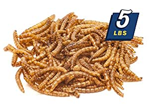 MBTP Bulk Dried Mealworms - Treats for Chickens & Wild Birds (5 Lbs)