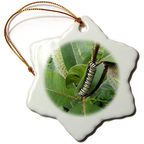 3dRose orn_22228_1 Monarch Caterpillar Porcelain Snowflake Ornament, 3-Inch