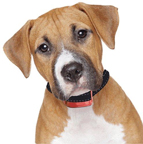 Dog Bark Collars Small Dogs Petsmart