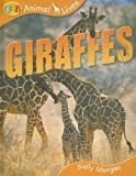 Giraffes, Sally Morgan, 1595662014