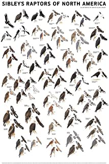 Bird Of Prey Identification Chart 6
