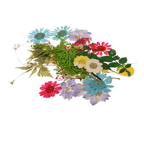 Price comparison product image Baoblaze Multiple Natural Dried Flowers,  Real Press Annual phlox,  Mixed Leaves,  Pink Larkspur,  Mini Rose,  Hydrangea,  Daisy,  and More Real Pressed Dried Flowers - 30pcs 5-110mm mix 1