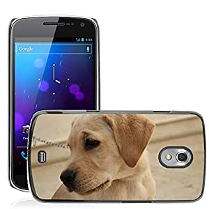 Super Stella Slim PC Hard Case Cover Skin Armor Shell Protection // M00107990 Labrador Pet Dog Animal Purebred // Samsung Galaxy Nexus GT-i9250 i9250