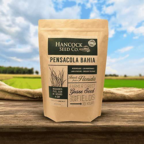 Hancock's Pensacola Bahia Grass Seed (Coated)