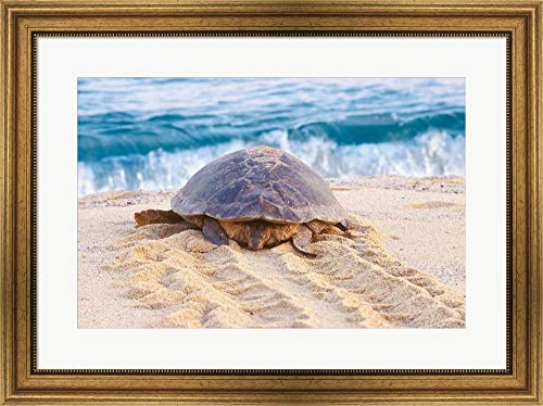Loggerhead Turtle, Nagata, Kagoshima, Yakushima, Japan by Rob Tilley/Danita Delimont Framed Art Print Wall Picture, Wide Gold Frame, 30 x 22 inches